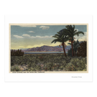 View of Dates Growing near the Salton Sea Postcard