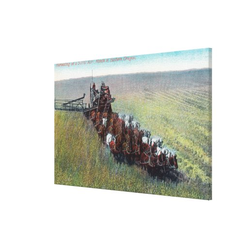 View of Farmers Harvesting with Huge Horse Canvas Prints