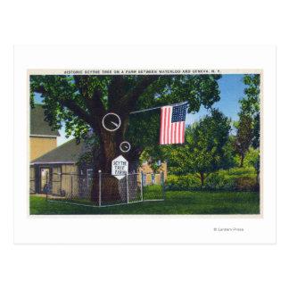 View of Historic Scythe Tree Farm Postcard