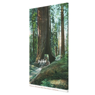 View of Horse Carriage Under Wawona Tree Canvas Print