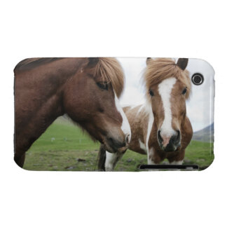 View of Horse, close-up iPhone 3 Cover