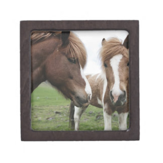 View of Horse, close-up Jewelry Box