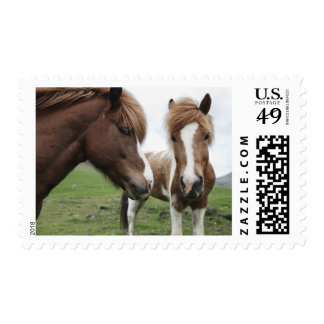 View of Horse, close-up Postage Stamp