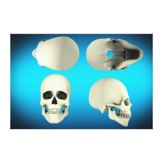 View Of Human Skull From Different Angles Canvas Print