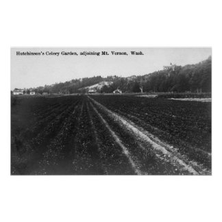 View of Hutchinson Celery Garden Poster