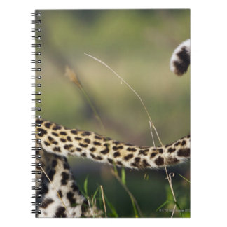 View of Leopards tail (Panthera pardus), Notebook