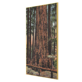 """View of """"Neck Breaker"""" at Big Trees Park Canvas Print"""
