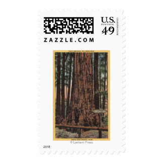 """View of """"Neck Breaker"""" at Big Trees Park Postage Stamp"""