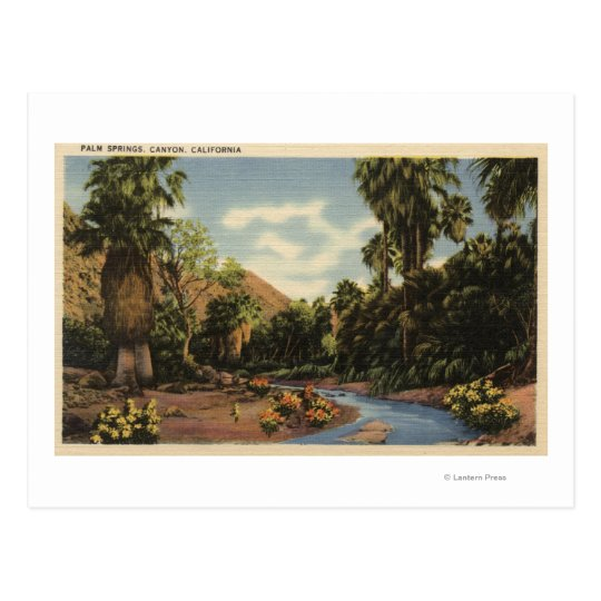 View of Palm Springs Canyon Postcard