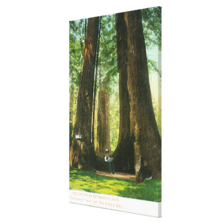 View of Redwood Twins at Big Tree Grove Canvas Print