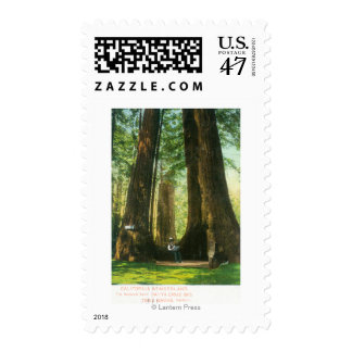 View of Redwood Twins at Big Tree Grove Postage Stamp
