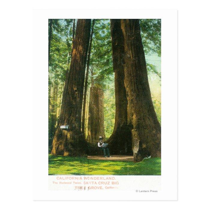 View of Redwood Twins at Big Tree Grove Postcard