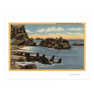 View of Seal Rocks with Seals Postcard
