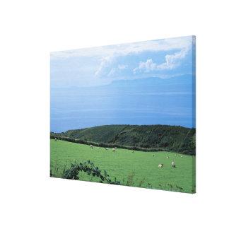 view of sheep grazing on lush hillside canvas print