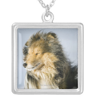 View of shetland sheepdog silver plated necklace