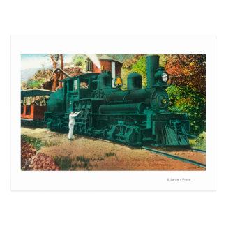 View of the Mt. Tamalpais Railway Train Postcard