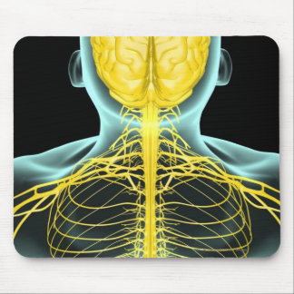View of the nerves in the upper body from above mouse pad