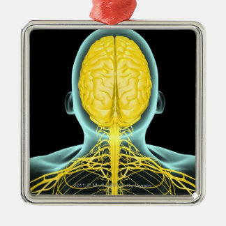 View of the nerves in the upper body from above christmas tree ornament