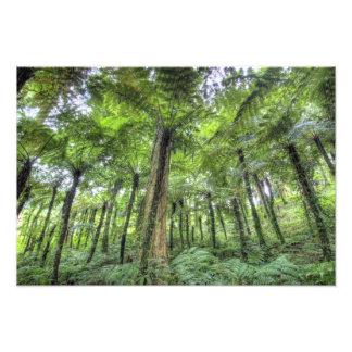 View of vegetation in Bali Botanical Gardens, Photo Print