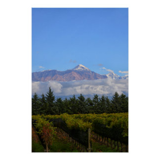 View Of Vineyard With Mountain On Background Poster