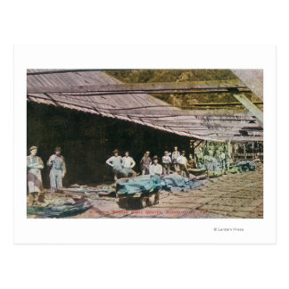 View of Workers at Eureka Slate Quarry Postcard