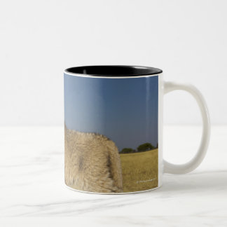 View of young lion cub (Panthera leo), looking Two-Tone Coffee Mug