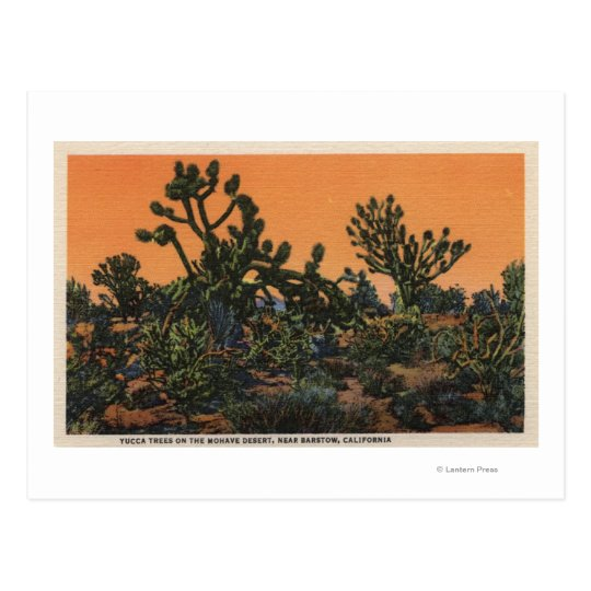 View of Yucca Trees in the Mohave Desert Postcard