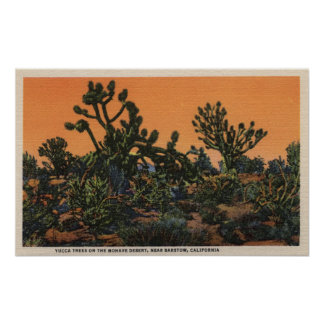 View of Yucca Trees in the Mohave Desert Poster