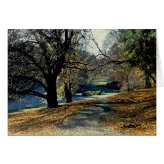 View through Beech Grove Card