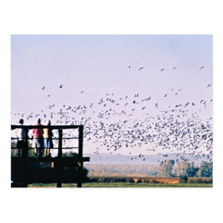 Viewing Deck at Desoto National Wildlife Refuge Postcards