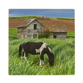 Viewing horses in a field in the Palouse 2 Wood Coaster