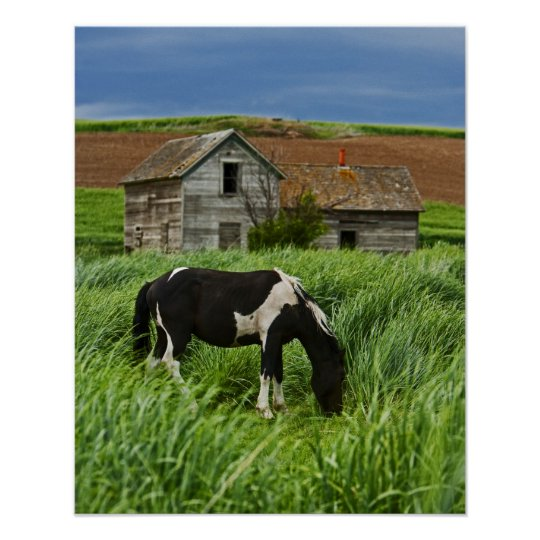 Viewing horses in a field in the Palouse 2 Poster