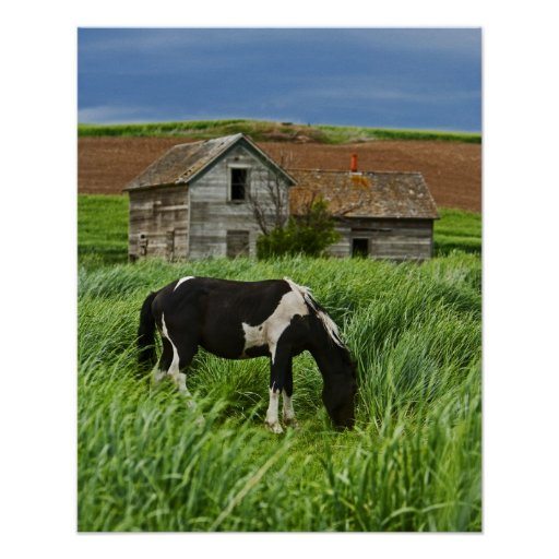Viewing horses in a field in the Palouse 2 Posters