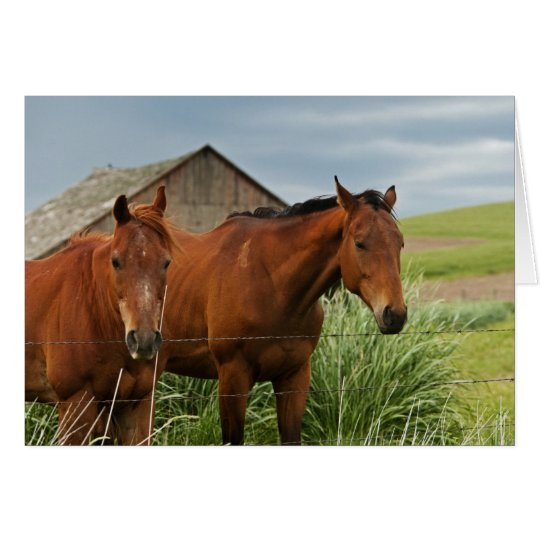 Viewing horses in a field in the Palouse 3 Card