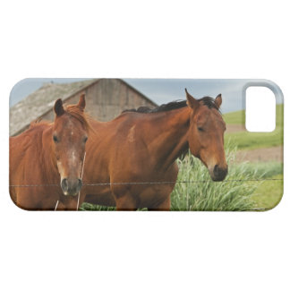 Viewing horses in a field in the Palouse 3 iPhone 5 Cover