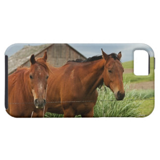 Viewing horses in a field in the Palouse 3 iPhone 5 Covers
