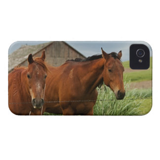 Viewing horses in a field in the Palouse 3 Blackberry Case