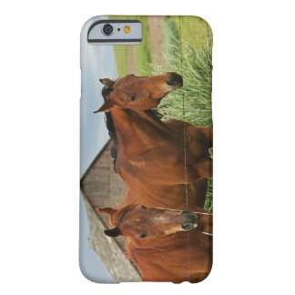 Viewing horses in a field in the Palouse 3 iPhone 6 Case