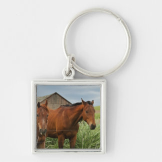 Viewing horses in a field in the Palouse 3 Keychain