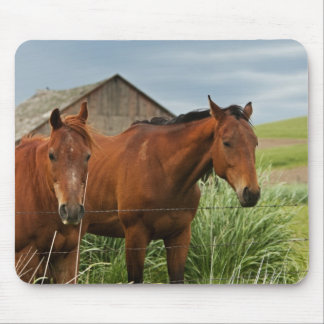 Viewing horses in a field in the Palouse 3 Mouse Pad
