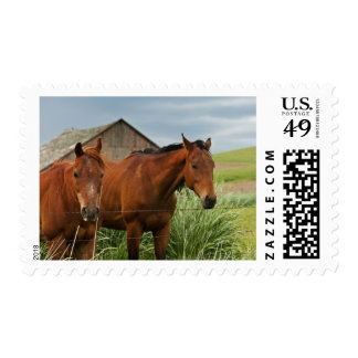 Viewing horses in a field in the Palouse 3 Stamp