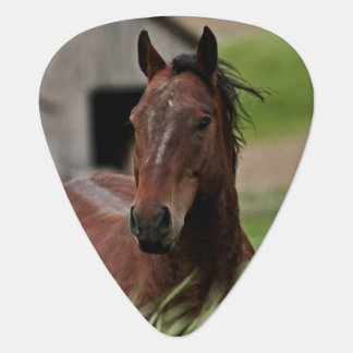 Viewing horses in a field in the Palouse Guitar Pick