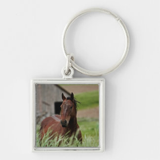 Viewing horses in a field in the Palouse Keychain