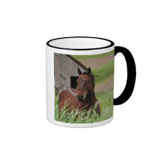 Viewing horses in a field in the Palouse Mugs