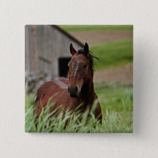 Viewing horses in a field in the Palouse Pinback Button