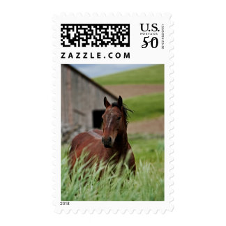 Viewing horses in a field in the Palouse Postage