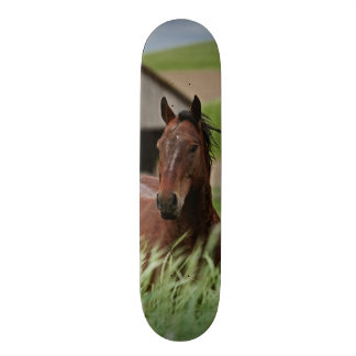 Viewing horses in a field in the Palouse Skateboard Deck