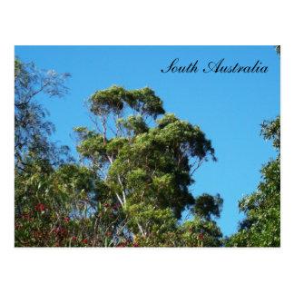 Views of Australia The Gum Tree Postcard