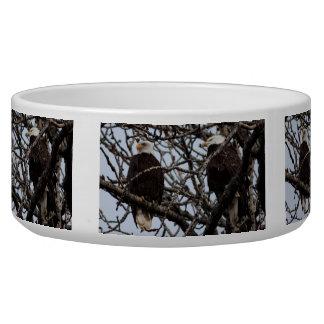 Vigilant Bald Eagles Bowl