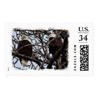 Vigilant Bald Eagles Postage Stamp